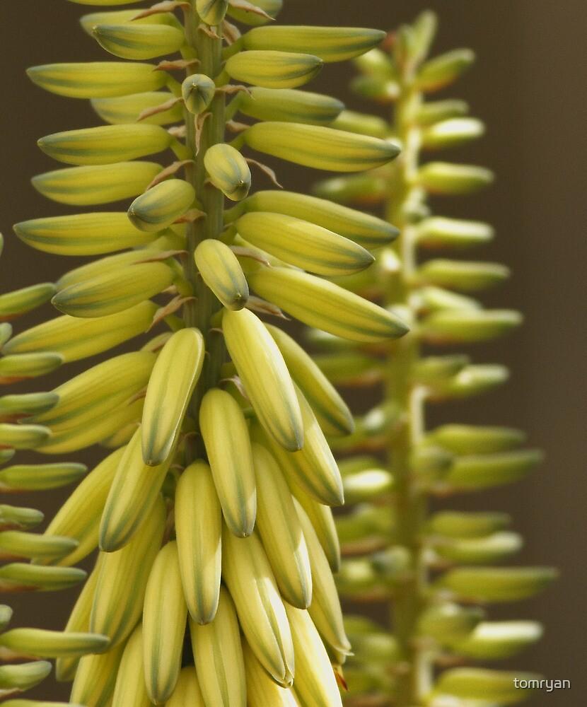 Yes, We Have No Bananas! by tomryan