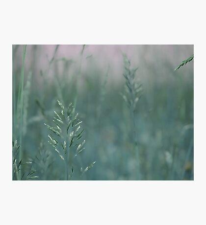 summer grass 16 Photographic Print