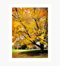 Golden Maple Art Print