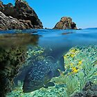Rocky islet  and Mediterranean dusky grouper fish underwater by Dam - www.seaphotoart.com