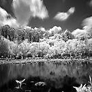 Pond by Tyler Thomas