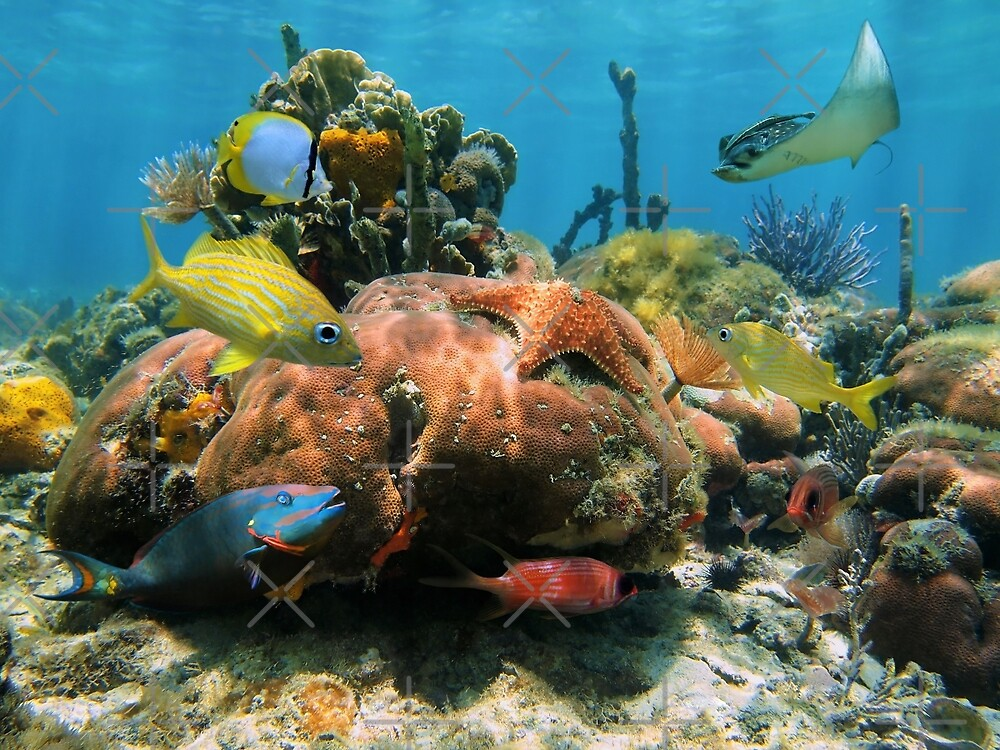 Coral reef with colorful tropical marine life by Dam - www.seaphotoart.com