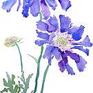 zwei lila blaues Scabiosa-Aquarell von ColorandColor