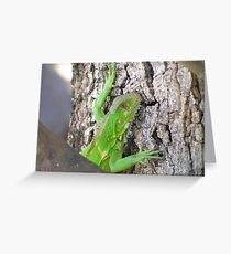 Iguana in the Pantanal Greeting Card