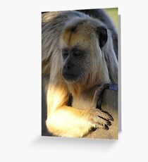 Howler monkey - Pantanal, Brasil Greeting Card