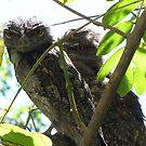 Valentine Owls 2010 by Annie Smit