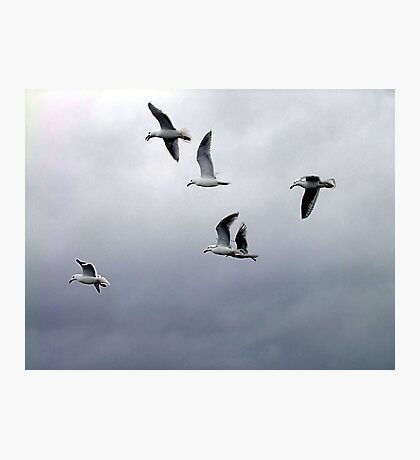 Gulls in a Storm (2) Photographic Print