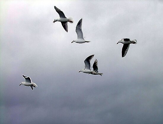 Gulls in a Storm (2) by George Cousins