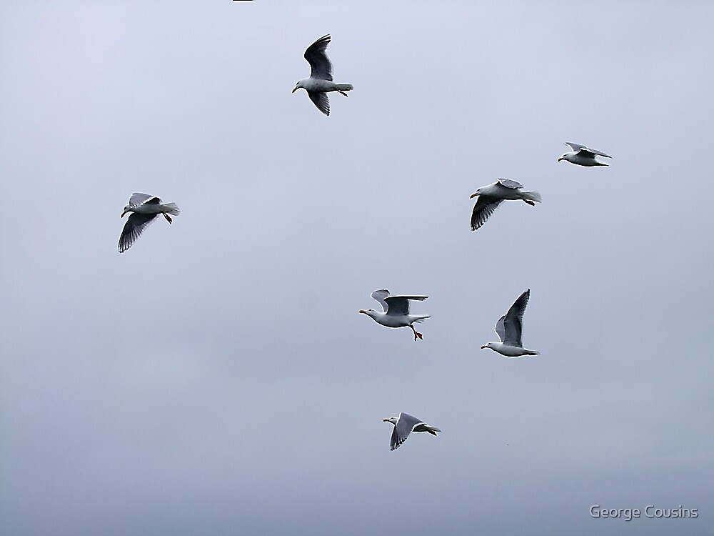 Gulls in a Storm (3) by George Cousins