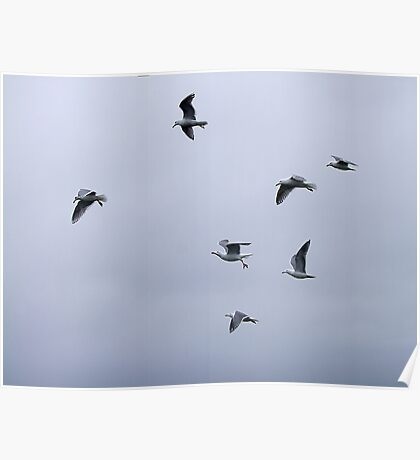 Gulls in a Storm (3) Poster