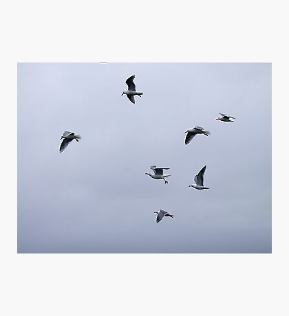Gulls in a Storm (3) Photographic Print