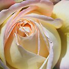 Peached Rose by Nancy Stafford