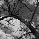 TreeTop in B/W by Cathy O. Lewis