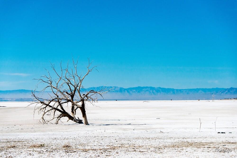 dead tree at salton sea by flomojo
