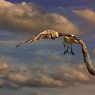 The Osprey Landing Pattern by byronbackyard
