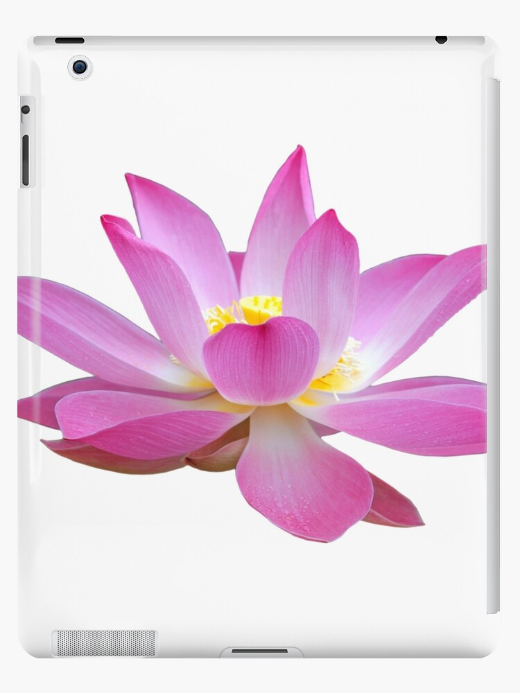 "open lotus flower bud"" ipad cases  skins by ernstc  redbubble, Beautiful flower"