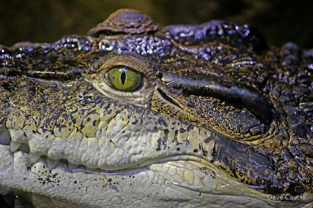 Croc by Dave Cauchi
