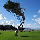 Saltwater Tree by Graham E Mewburn