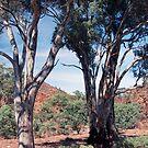 Brachina Gorge, Flinders Ranges, South Australia by Adrian Paul