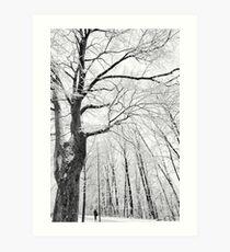 Under the Winter Canopy Art Print