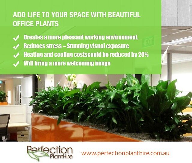 Add life to your space with beautiful Office Plants by perfectionplant