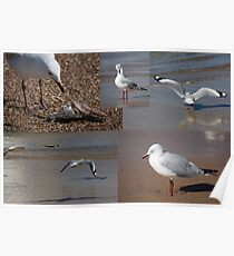 The Busy Life Of Mr Gershwin Gull Poster