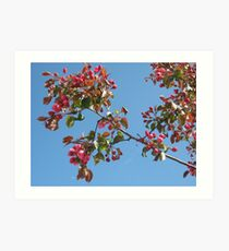 Red blossoms and the moon in the sky Art Print