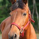 Horse in a Field by DebbieCHayes