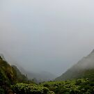 Iao Valley State Park Study 9  by Robert Meyers-Lussier
