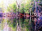 Mirror Land by Veronica Schultz