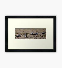 Seagulls Inline Framed Print