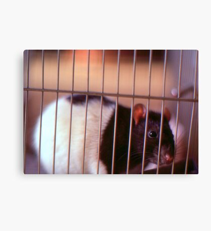 Joe Rat Canvas Print