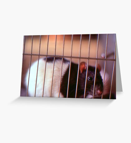 Joe Rat Greeting Card