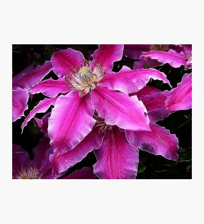 Clematis in fractulius Photographic Print