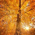 Exteme Fall by Bob Larson