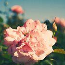 Retro Rose by Sarah Moore