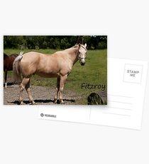 Fitzroy - NNEP Ottawa, On Postcards