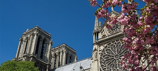 Notre Dame Pink Flowers by PatiDesigns