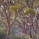 Misty Morning,Kalgoorlie.West Australia by robynart
