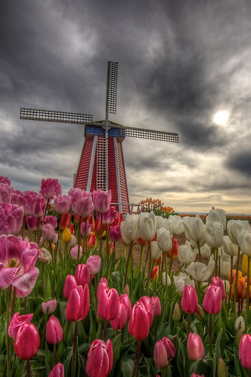 Tulip Festival by Deri Dority