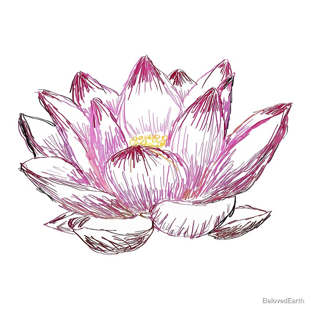 Pink Lotus Line Drawing by BelovedEarth