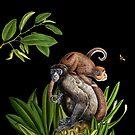 Monkey by fifikoussout
