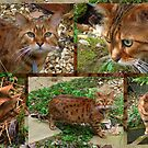 Bengal Cat Collage by AnnDixon