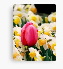 Proudly Pink Canvas Print