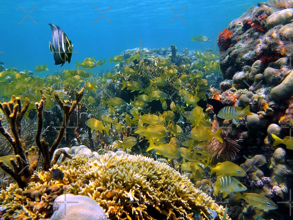 Shoal of tropical fish in a coral reef by Dam - www.seaphotoart.com