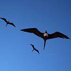 Frigatebirds Overhead by GedTKirk