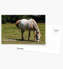 Caramel - NNEP Ottawa ON Postcards