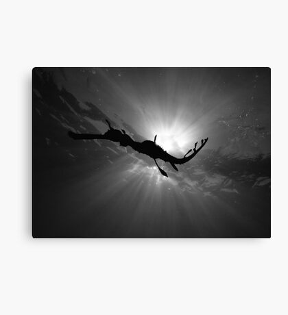 Seadragon & Sunlight Canvas Print