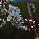 Suddenly it's Spring by Bryan D. Spellman