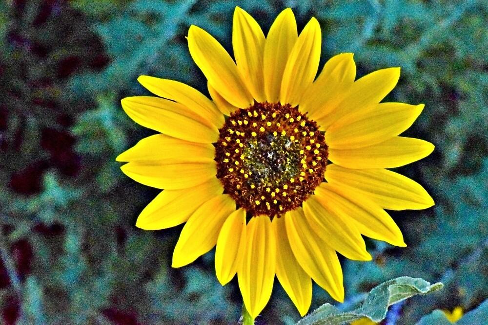 Flower close-up by Jackson Killion